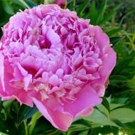 flowers-267914_1920