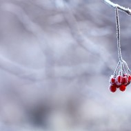 frozen-berries-red-fruits-64705