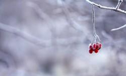 frozen-berries-red-fruits-64705